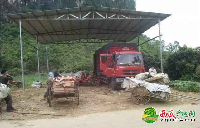 2017广西崇左西瓜代办批发价格产地电话