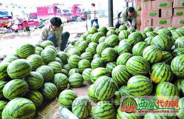 2017云南瑞丽缅甸水甜◐替●电话产地