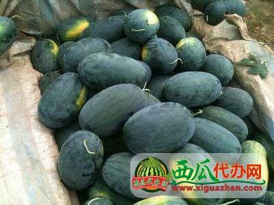 湖北省汉川市中洲农场西瓜代办批发基地电话