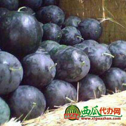 湖北荆州市马家寨西瓜代办批发产地价格-黑皮无籽西瓜