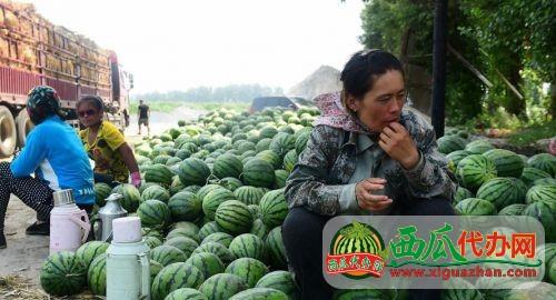 广西南宁西瓜产地价格行情专业西瓜代收代发