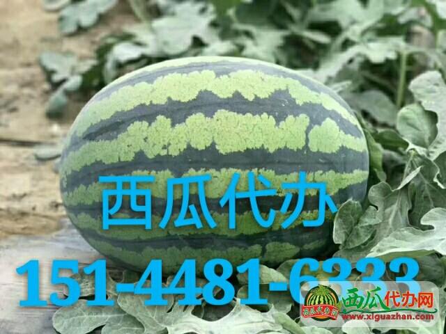 辽宁锦州西瓜代收代办凌海西瓜批发价格|报价