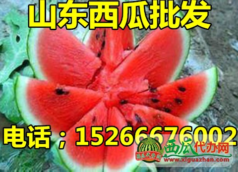 山东今日西瓜装车价格是多少15266676002