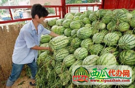 安徽淮北百善颜道口万亩西瓜基地