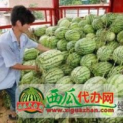 2019年安徽砀山水甜◐上市时间4月底大量供应