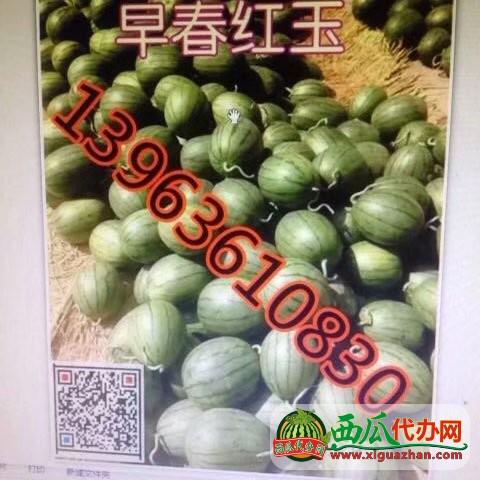 山◐省潍坊水甜◐批发产地【山◐水甜◐替●代收】