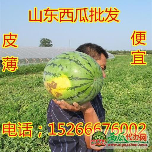 15266676002山东薄皮京欣西瓜产地价格行情