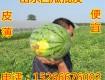 15266676002那里的西瓜最便宜山东西瓜价格便宜