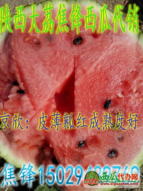 甜王西瓜西瓜图三