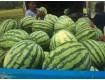 陕西长花瓜种植基地金城5水甜◐产地供应价格行情