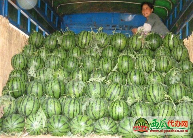 河南尚村岗大有实力的西瓜代办公司
