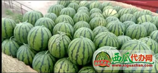 吉林省洮南市黑水镇西瓜现货供应中