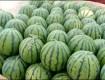 吉林省洮南市黑水镇水甜◐现货供应中