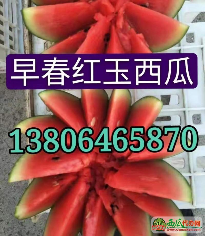 供(gong)應(ying)早春紅(hong)玉(yu)西瓜(gua) 產地(di)直銷(xiao)價(jia)格(ge)便宜