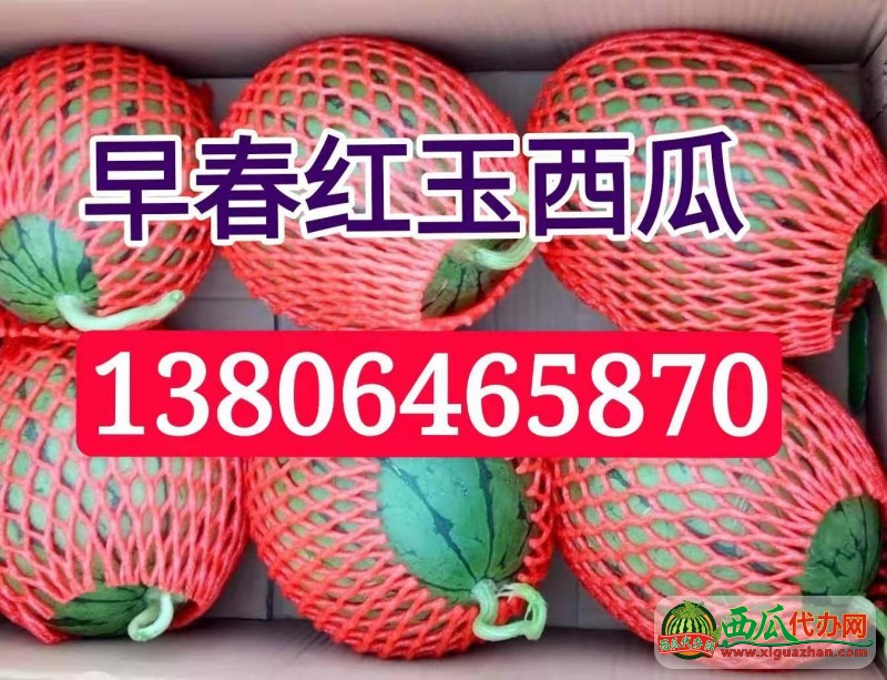 潍坊红玉西瓜大量供应 地头装车价格便宜