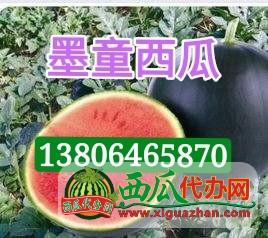 供(gong)應(ying)墨童無(wu)籽西瓜(gua)3斤以上糖度15