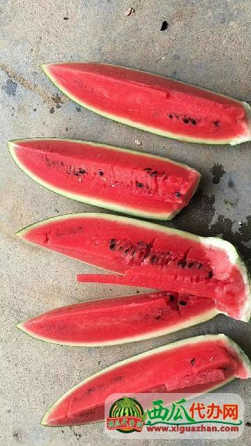 开封通许西瓜种植产地西瓜上市时间@今日河南西瓜一斤多少钱