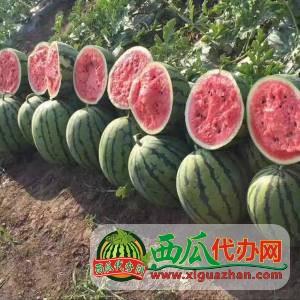 沈(shen)陽新民西瓜(gua)代(dai)辦批(pi)發價(jia)格(ge)咨(zi)詢15264795020