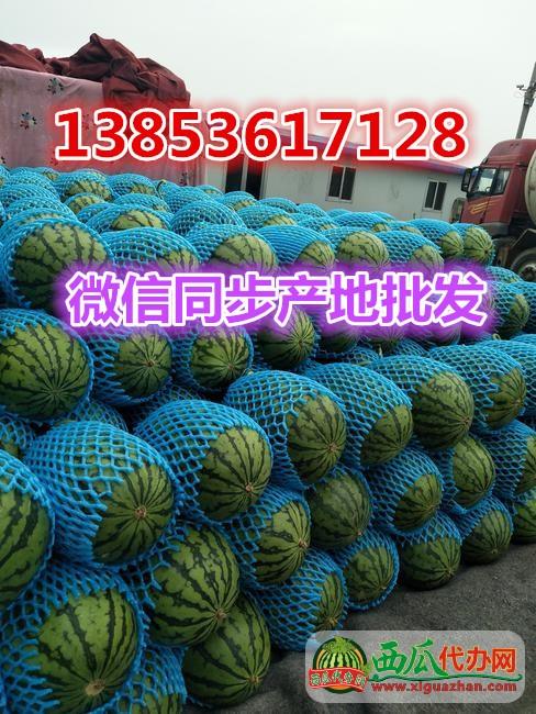 产地直供潍坊早春红玉西瓜价格便宜山东西瓜代办