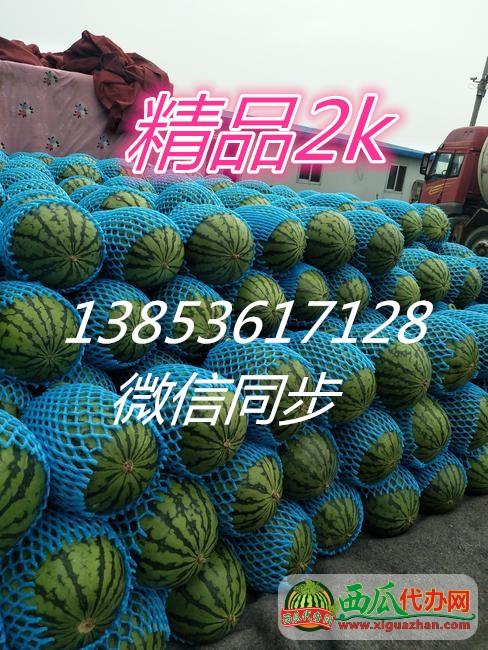 大量供应早春红玉西瓜 精品2k/山东西瓜今日价格