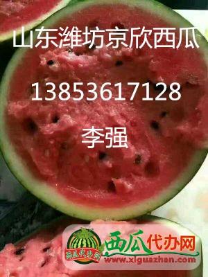山东潍坊大量供应西瓜@山东西瓜上市时间和产地联系