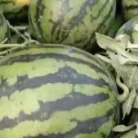 甜王西瓜大量供应中货源充足价格便宜