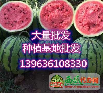山东甜王西瓜批发中心