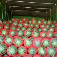 甜王西瓜甜度18精品大棚西瓜基地直销,安徽砀山西瓜代办