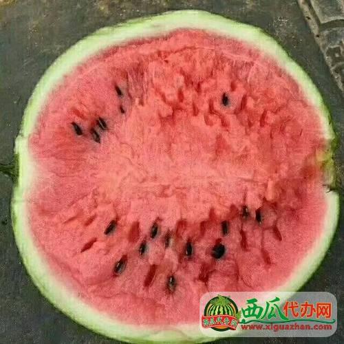 2021安徽西瓜代办产地京欣/8424/甜王西瓜产地