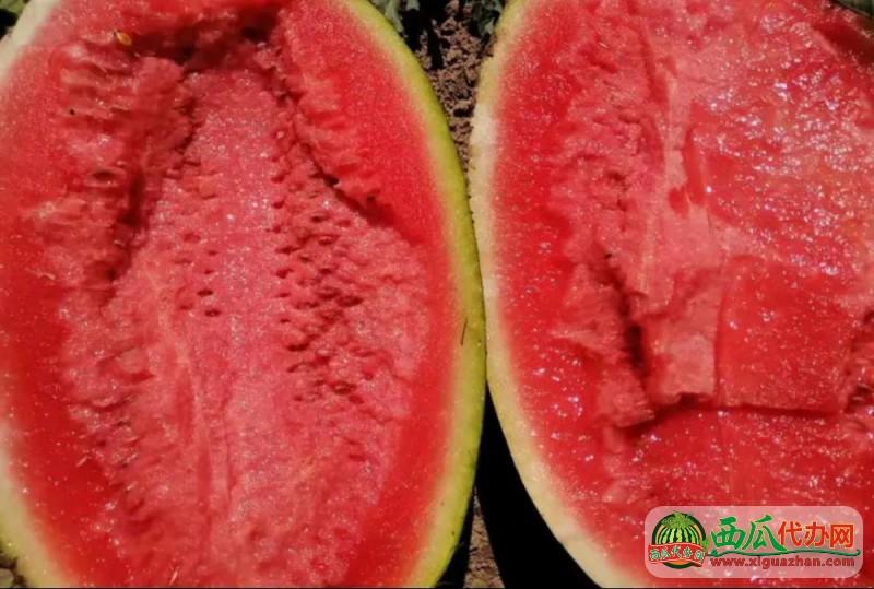 新疆安农金城西瓜,肉美色正,价格公道,对接全国批发市场