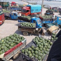 山东聊城西瓜代办代收产地,瓜果蔬菜代收代发