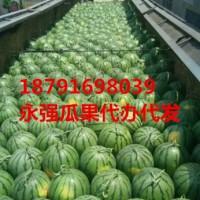 陕西省蒲城县甜王西瓜最近价格